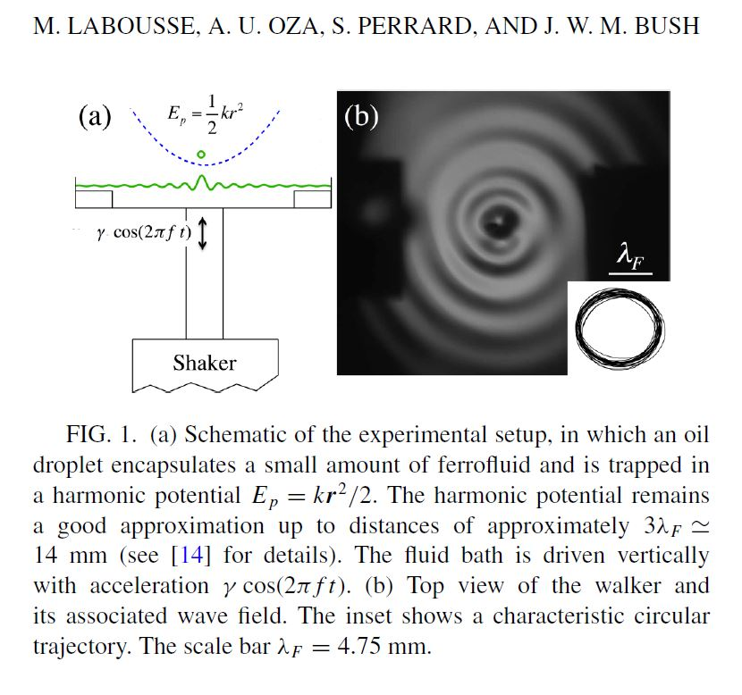 Pilot-wave dynamics in a harmonic potential Quantization and stability of circular orbits